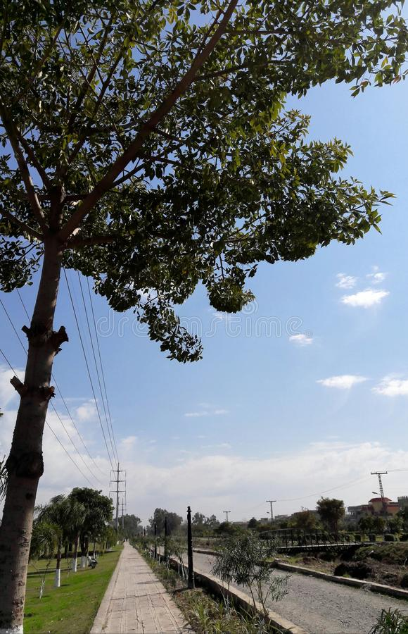 Bello albero al parco immagini stock libere da diritti