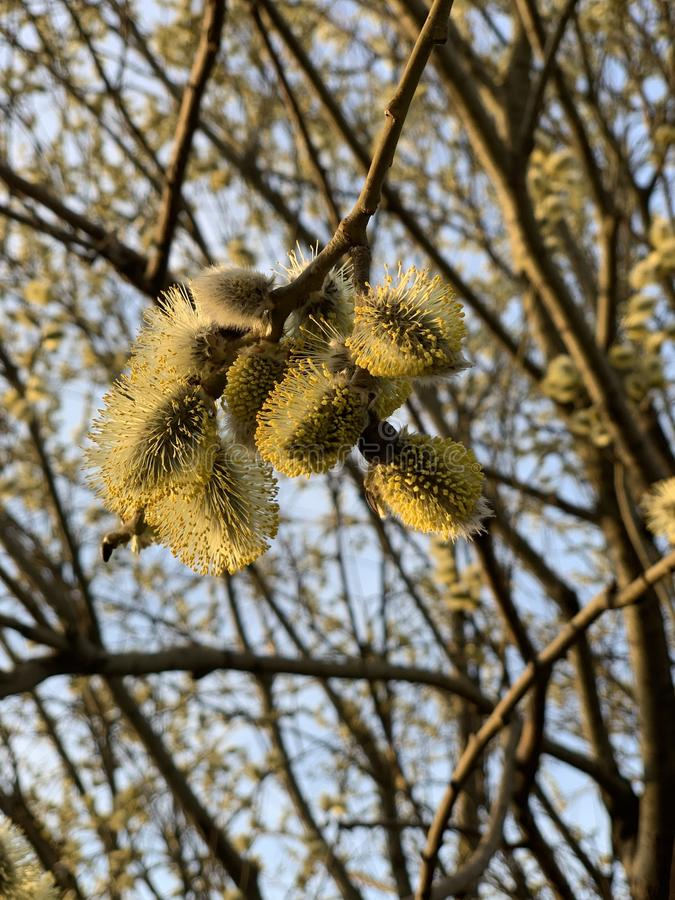 Bello albero fotografie stock libere da diritti