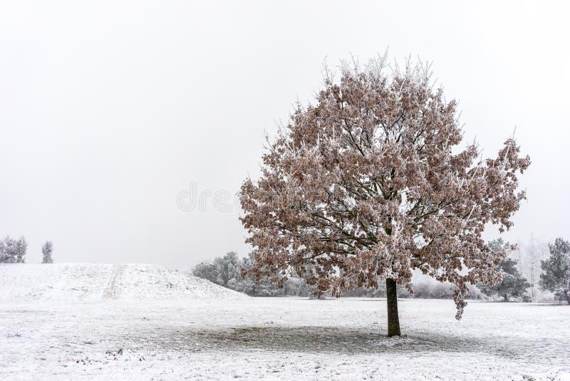 Bello albero congelato fotografia stock