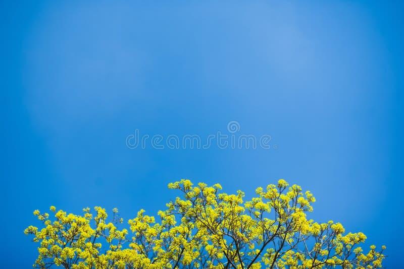 Bello albero della sorgente fotografia stock