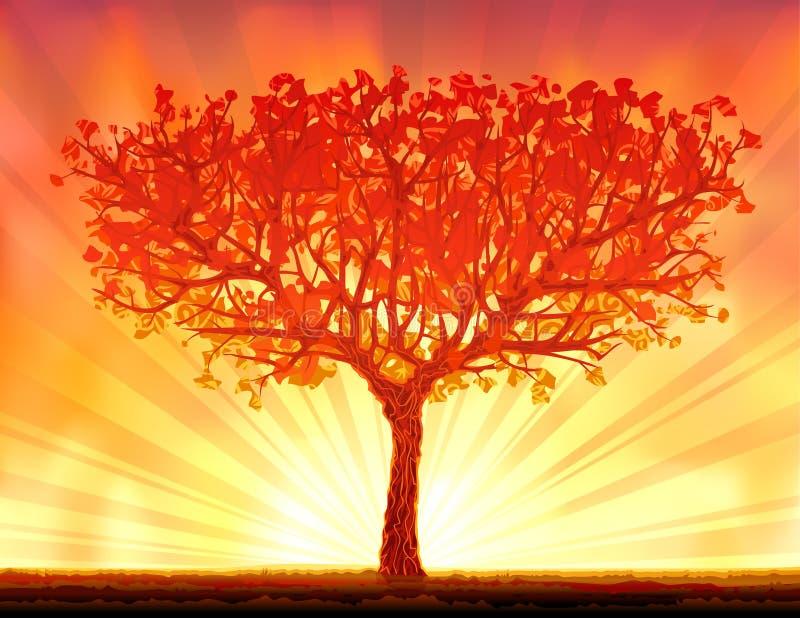 Bello albero di tramonto di autunno illustrazione di stock