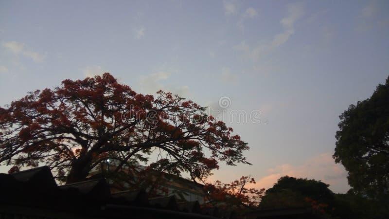 Bello albero nel tramonto fotografie stock