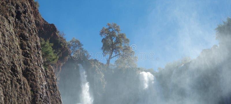 Bello albero su orizzonte sopra le cascate di schiumatura immagini stock libere da diritti