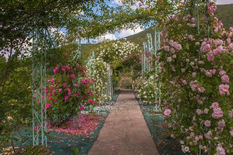 Bello arco con le rose nel giardino romantico fotografia stock libera da diritti