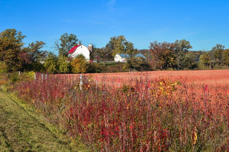 Bello Autumn Farm Scene con il granaio bianco immagini stock libere da diritti