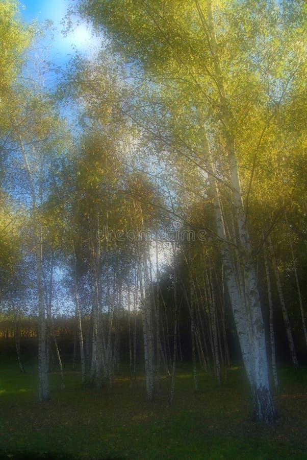Download Bello Autumn Landscape With Multi-Colored Lines Colore Artificiale Di Autunno Fotografia Stock - Immagine: 101658130
