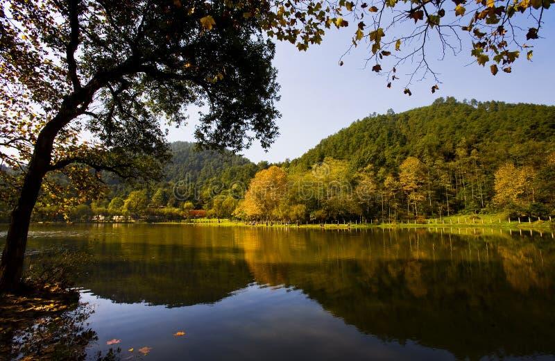 Download Bello autunno immagine stock. Immagine di alberi, background - 7304899