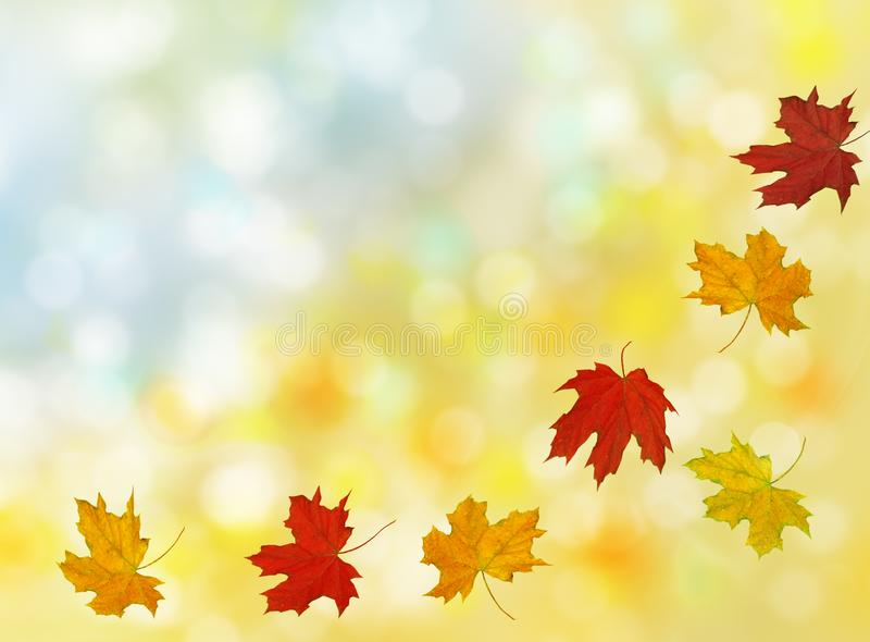 Bello autunno con le foglie di acero di volo con bokeh immagini stock libere da diritti