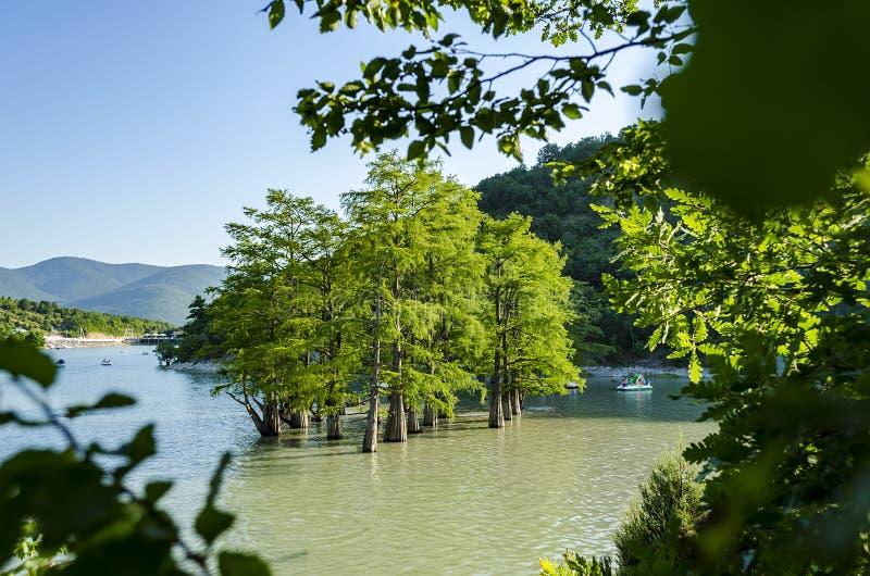 Bello boschetto minuscolo degli alberi di cipresso calvo che crescono in acqua del lago Paesaggio scenico del cielo blu di estate fotografie stock