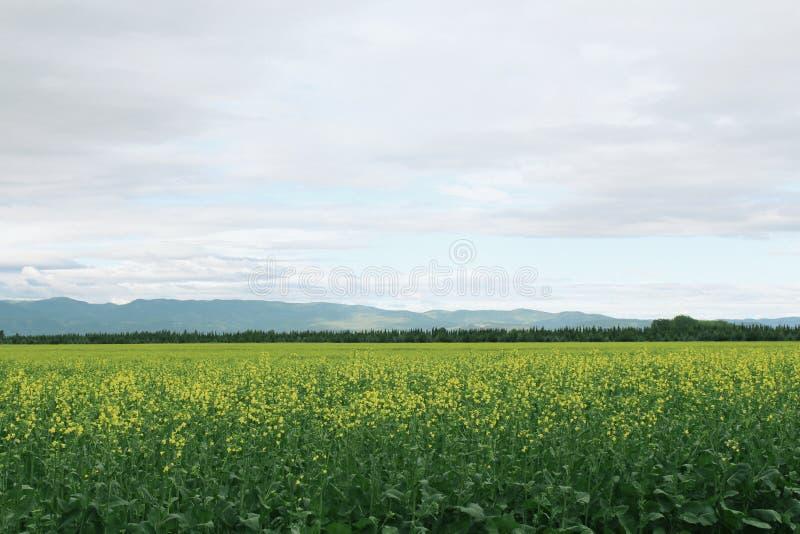 Bello campo aperto verde con le montagne nei precedenti e nel cielo di stupore immagini stock libere da diritti