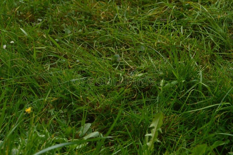 Bello campo di erba densa nel parco naturale di Gorbeia Paesaggi della natura delle piante fotografia stock