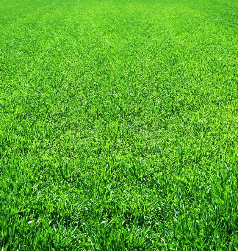 Bello campo di erba verde scenico fotografia stock