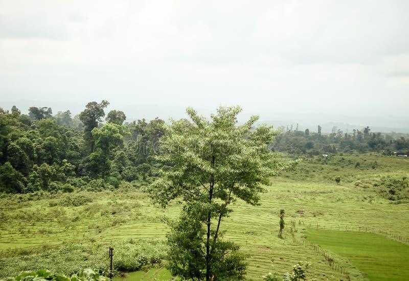 Bello campo a terrazze di coltivazione del tè verde circondato dalla montagna Jalpaiguri è una destinazione turistica popolare ne immagini stock libere da diritti