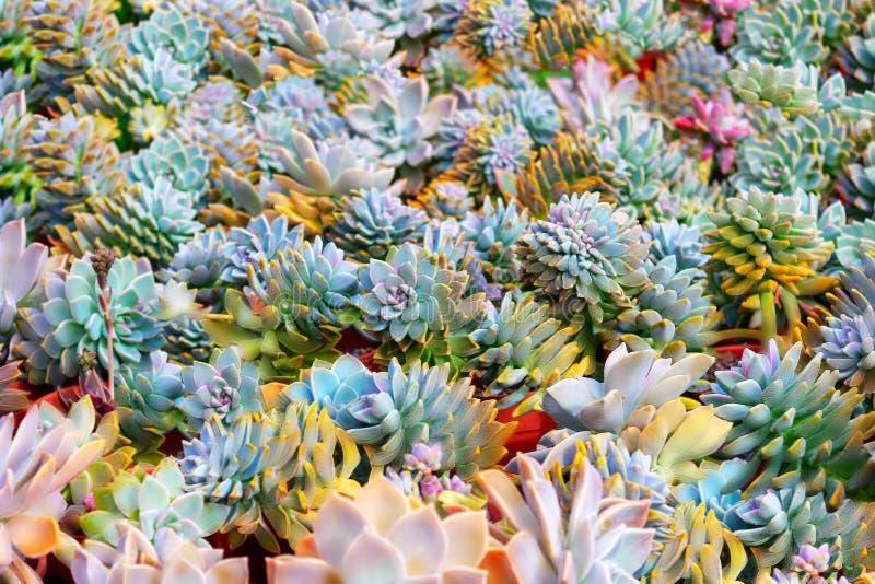 Bello campo variopinto dei fiori dei cactus il giorno soleggiato fotografie stock libere da diritti