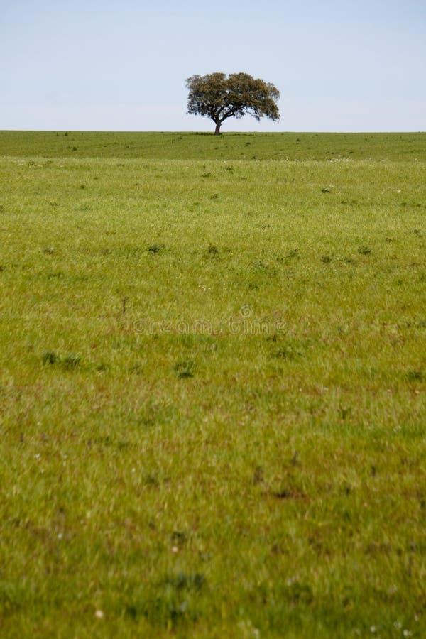 Bello campo verde fotografie stock libere da diritti