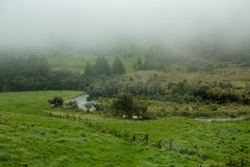 Bello campo verde con nebbia sopra nella campagna fotografia stock
