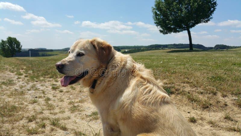 Bello cane fotografia stock libera da diritti