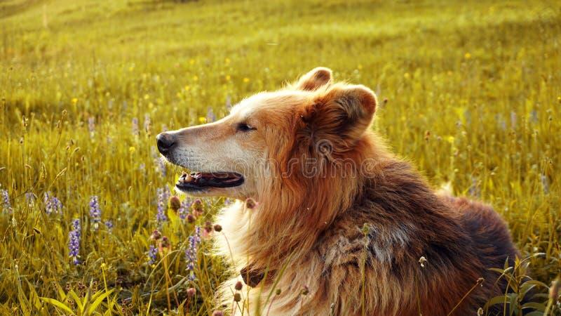Bello cane e tramonto fotografia stock