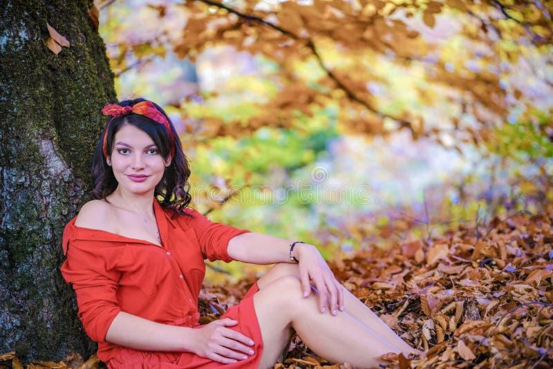 Bello castana si rilassa in foglie vicino ad un albero immagini stock