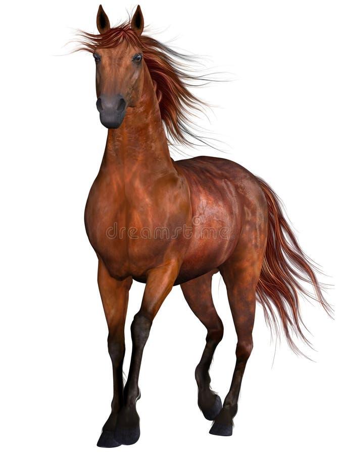 Bello cavallo illustrazione di stock