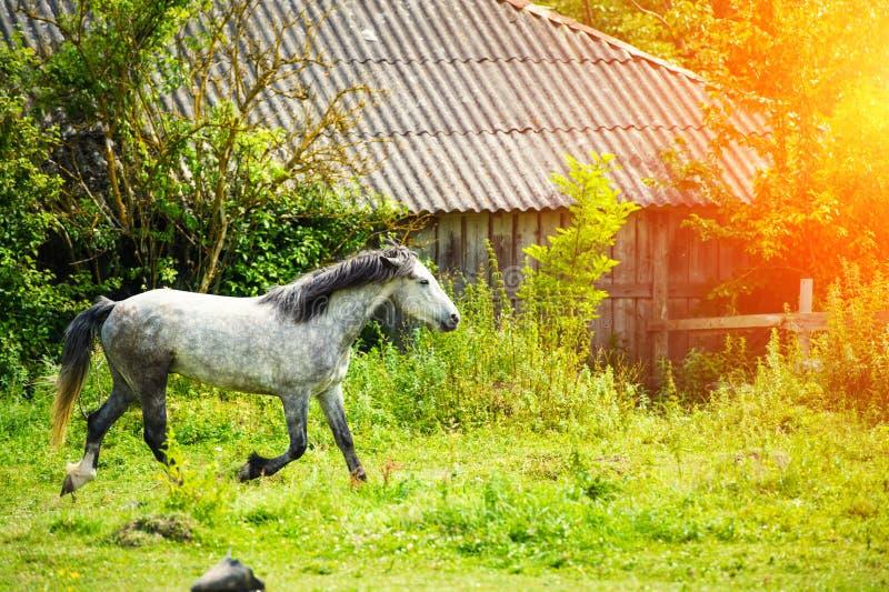 Bello cavallo immagine stock
