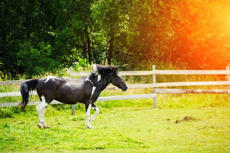 Bello cavallo immagine stock libera da diritti