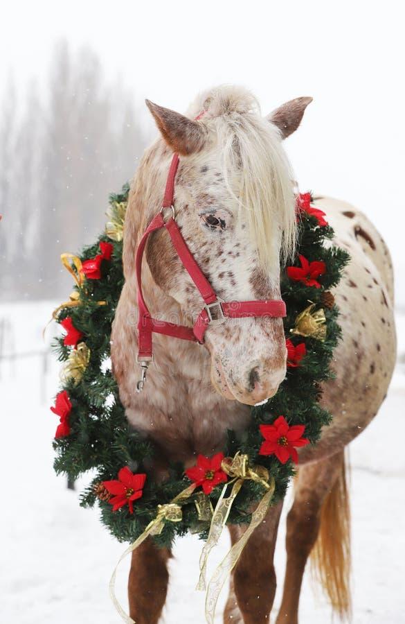 Bello cavallo che indossa sul suo collo una ghirlanda fantastica di natale quando nevicano ancora immagini stock libere da diritti