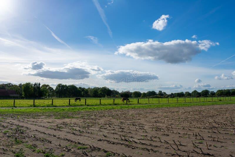 Bello cielo blu della nuvola sopra i campi ed i prati con i cavalli fotografia stock libera da diritti