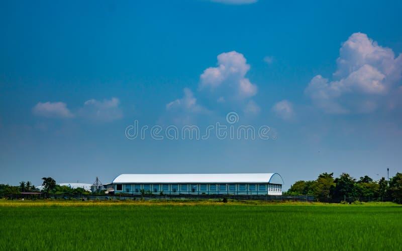 Bello cielo blu sopra le risaie e l'azienda agricola locale nel paesaggio della campagna della Tailandia su estate immagine stock libera da diritti