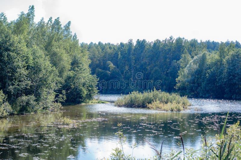 Bello cielo e la purezza dello spazio, stagno della foresta intorno a qui da pescare fotografia stock libera da diritti