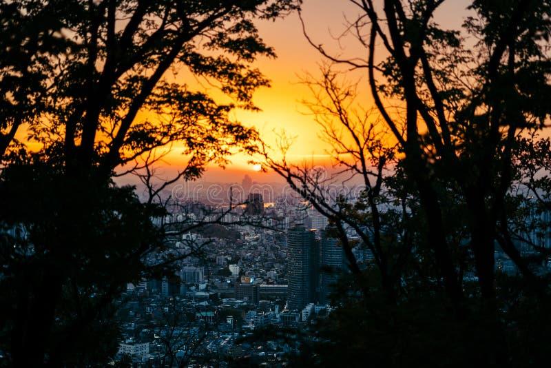 Bello colpo del mare al tramonto preso da dietro gli alberi e la pianta immagine stock libera da diritti
