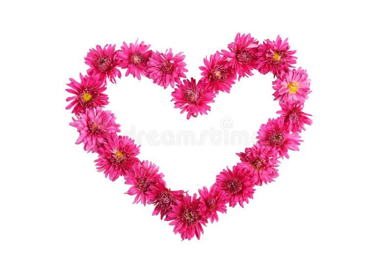 Bello cuore con i crisantemi porpora isolati su bianco fotografia stock libera da diritti