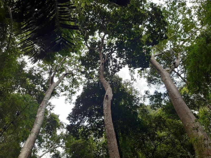 Bello dell'albero fotografia stock