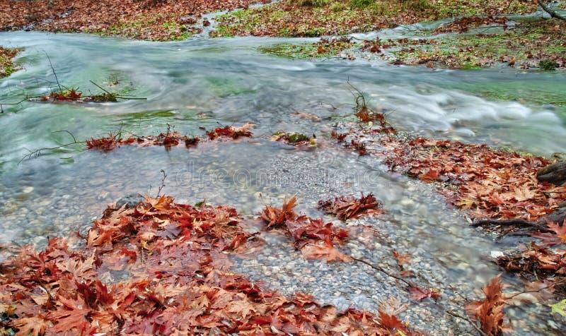 Bello dettaglio di scorrimento dell'acqua della corrente in autunno fotografia stock libera da diritti