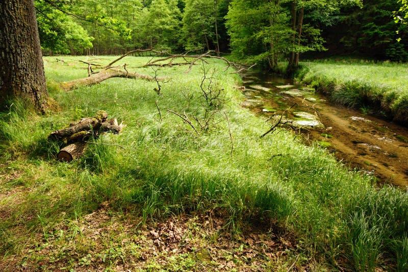 Bello e fiume pulito Kamenice immagine stock libera da diritti