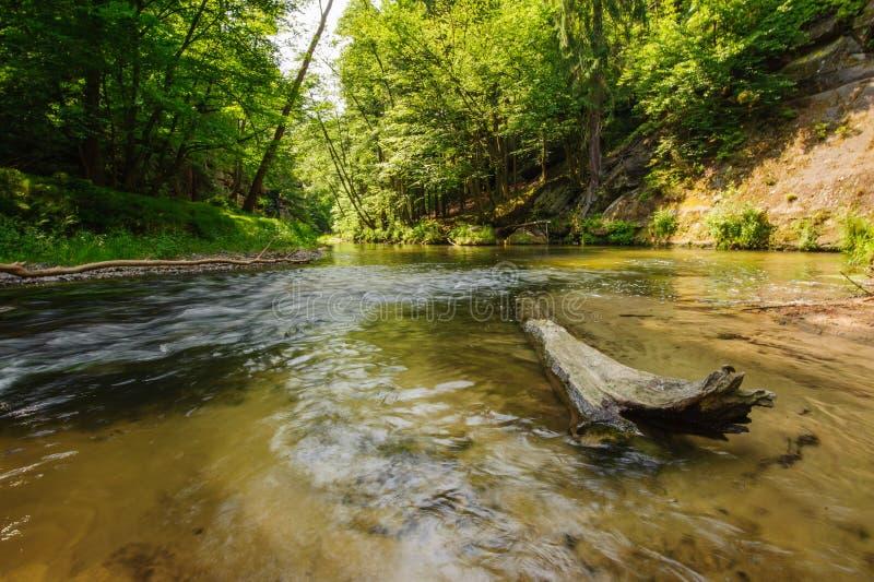 Bello e fiume pulito Kamenice fotografia stock