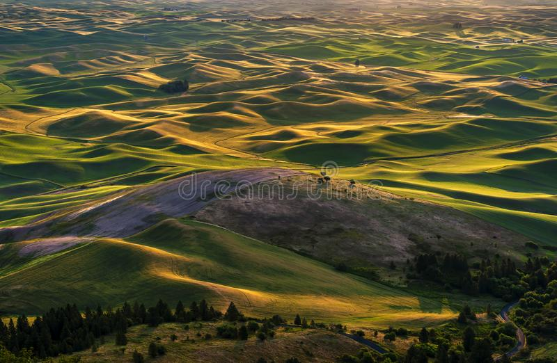 Bello e Palouse drammatico, Washington, alba di estate immagine stock