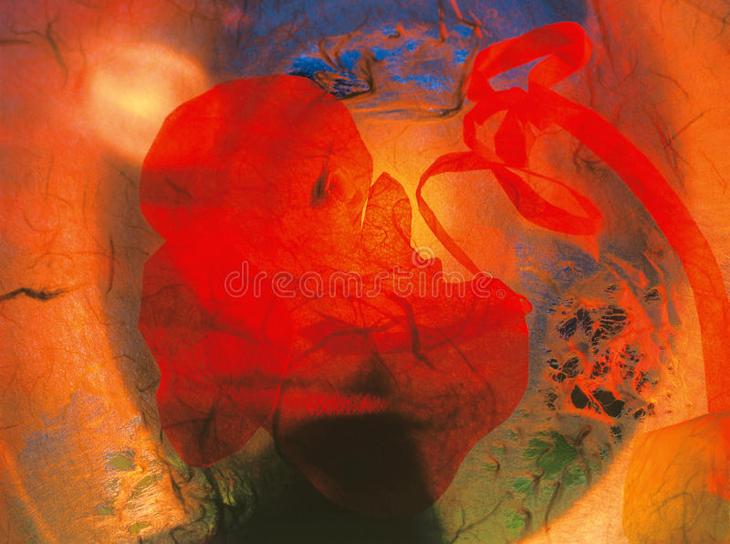 Bello embrione fotografia stock