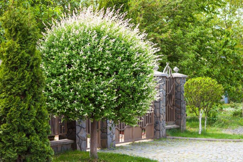 Bello esterno della casa di lusso Iarda con erba verde, il recinto e l'albero come il dente di leone immagini stock