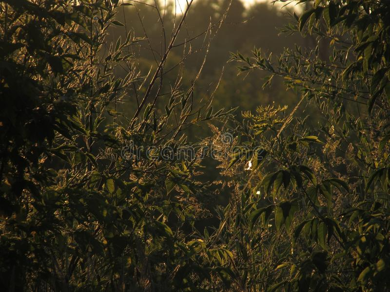 Bello favoloso ha scolpito i contorni openwork di erba verde e di fogliame, illuminati dal sole dorato dell'alba immagine stock libera da diritti