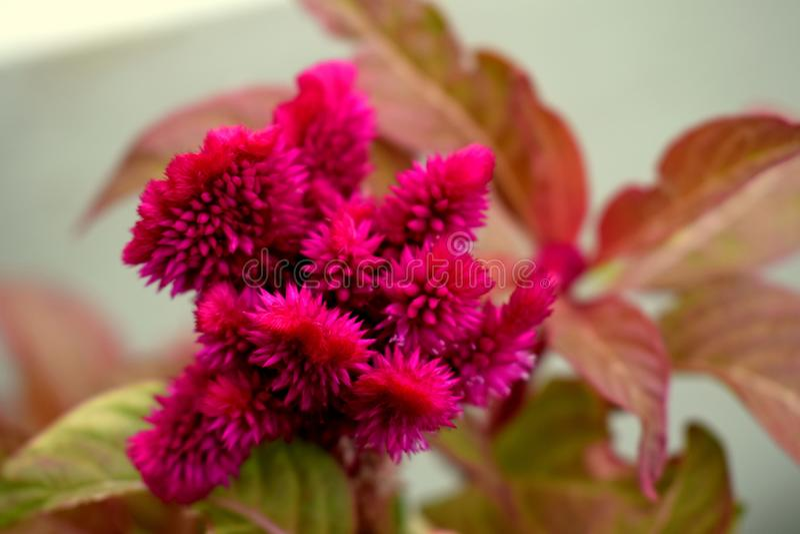 Bello fiore fotografie stock
