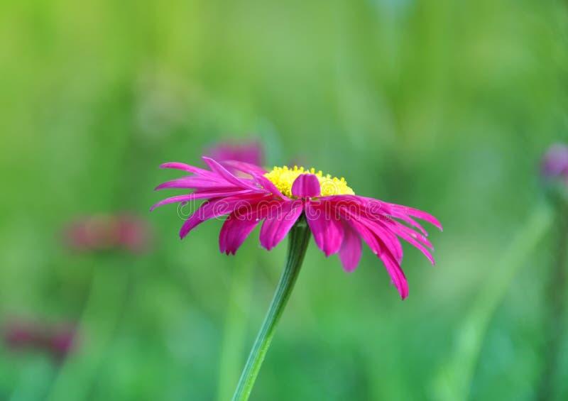 Download Bello fiore immagine stock. Immagine di giardino, vago - 55361297