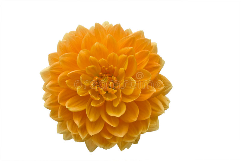 Bello fiore arancione fotografie stock libere da diritti