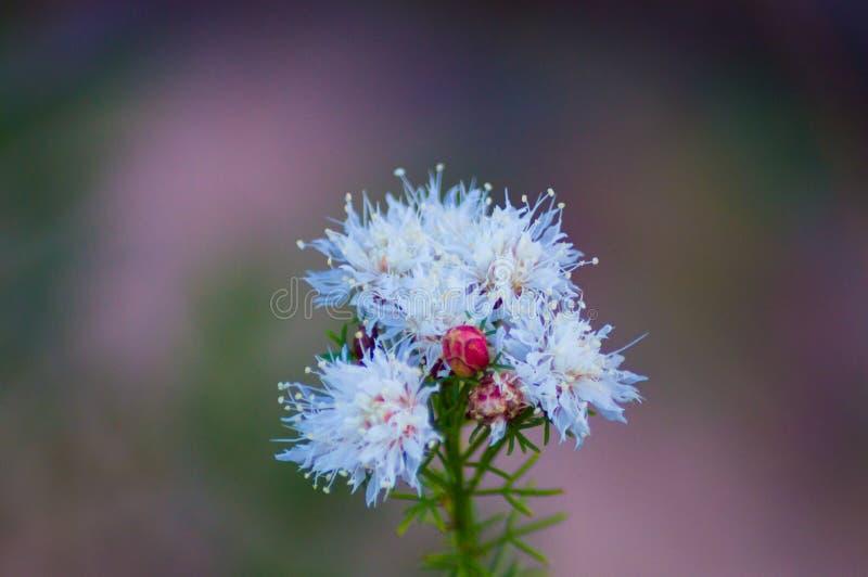 Bello fiore bianco immagine stock