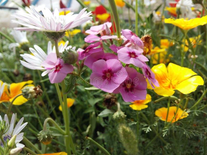 Bello fiore bianco fotografie stock