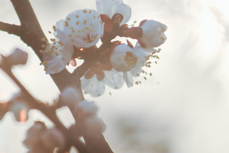 Bello fiore del fiore della frutta immagini stock