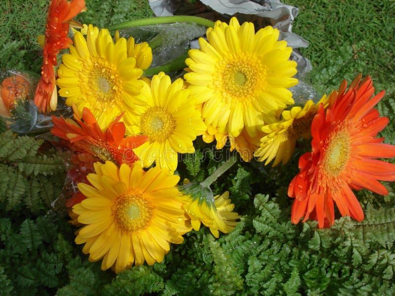Bello fiore della Sri Lanka fotografie stock