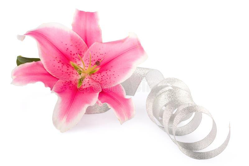Bello fiore dentellare del giglio fotografia stock