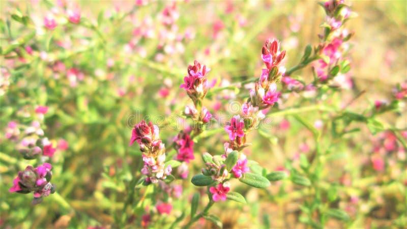 Bello fiore di erba fotografie stock