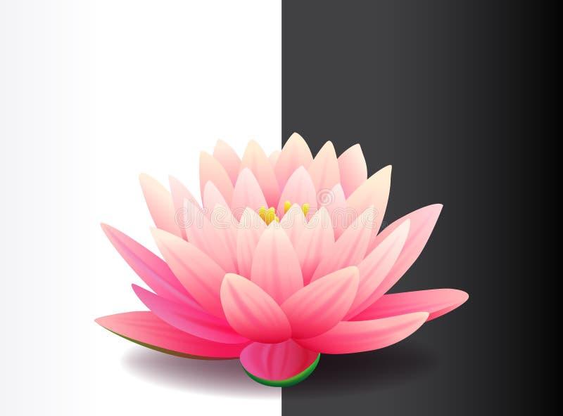 Bello fiore di loto rosa realistico isolato su fondo in bianco e nero, pianta acquatica, illustrazione di vettore royalty illustrazione gratis